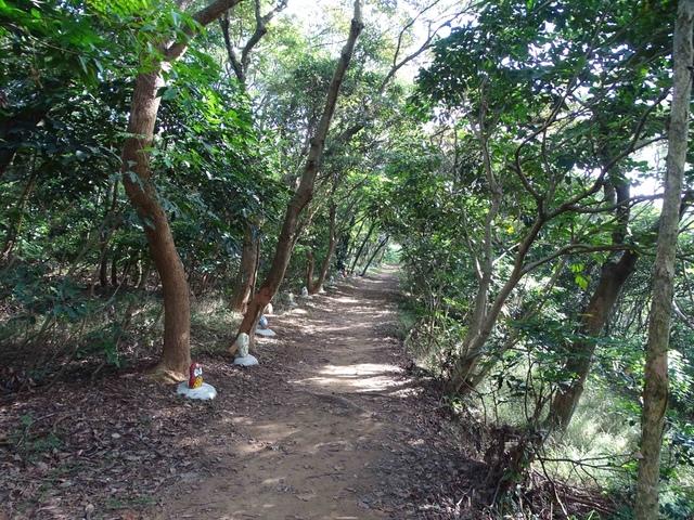 DSC05574C.jpg - 1051119 桃園蘆竹五酒桶山步道