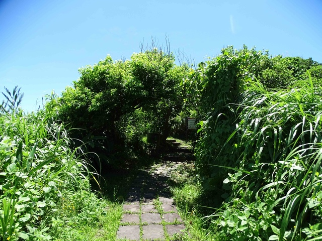 DSC04520C.jpg - 1060630 花蓮豐濱芭崎眺望台,大石鼻山步道