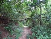 1040926 新竹新埔文山步道、犁頭山:DSC03746C.jpg
