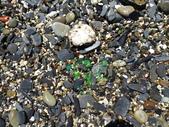 1060810 宜蘭蘇澳玻璃海灘(賊仔澳):DSC07442.JPG