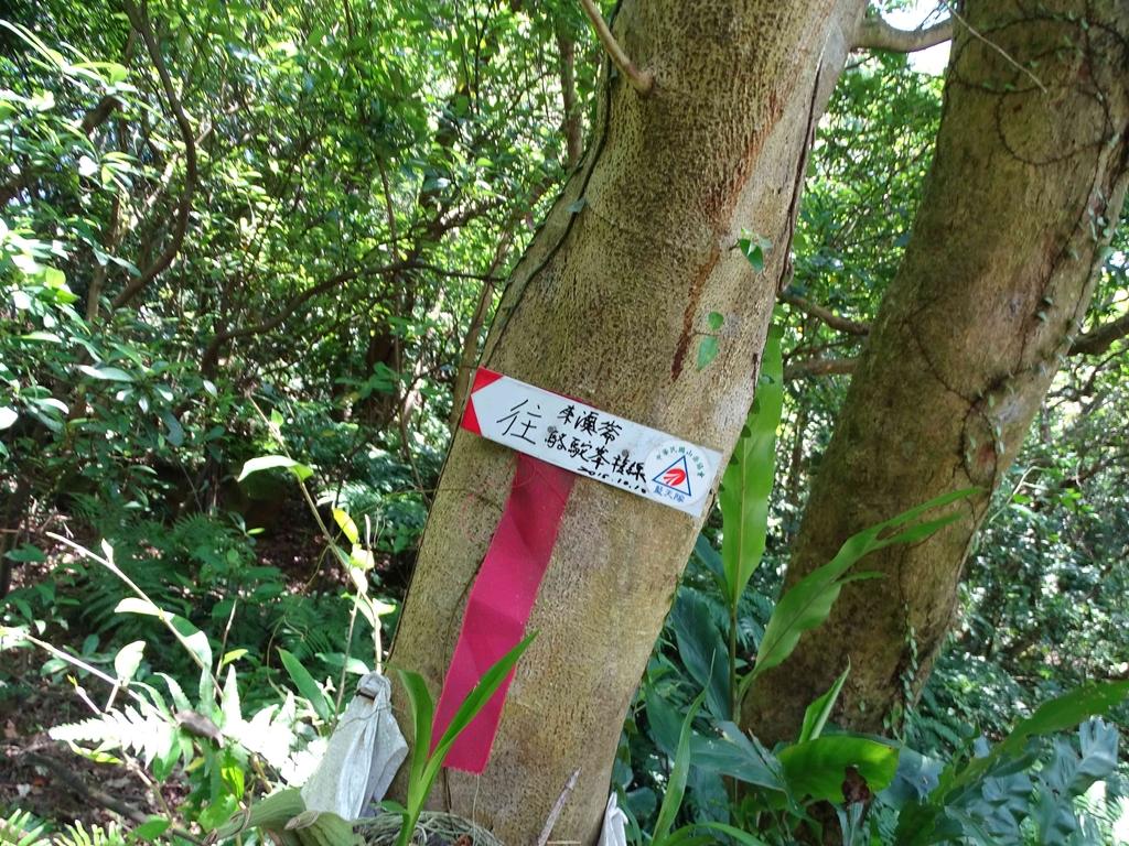 1050924 新北萬里野柳里登山步道、駱駝峰稜線步道:DSC08524C.jpg