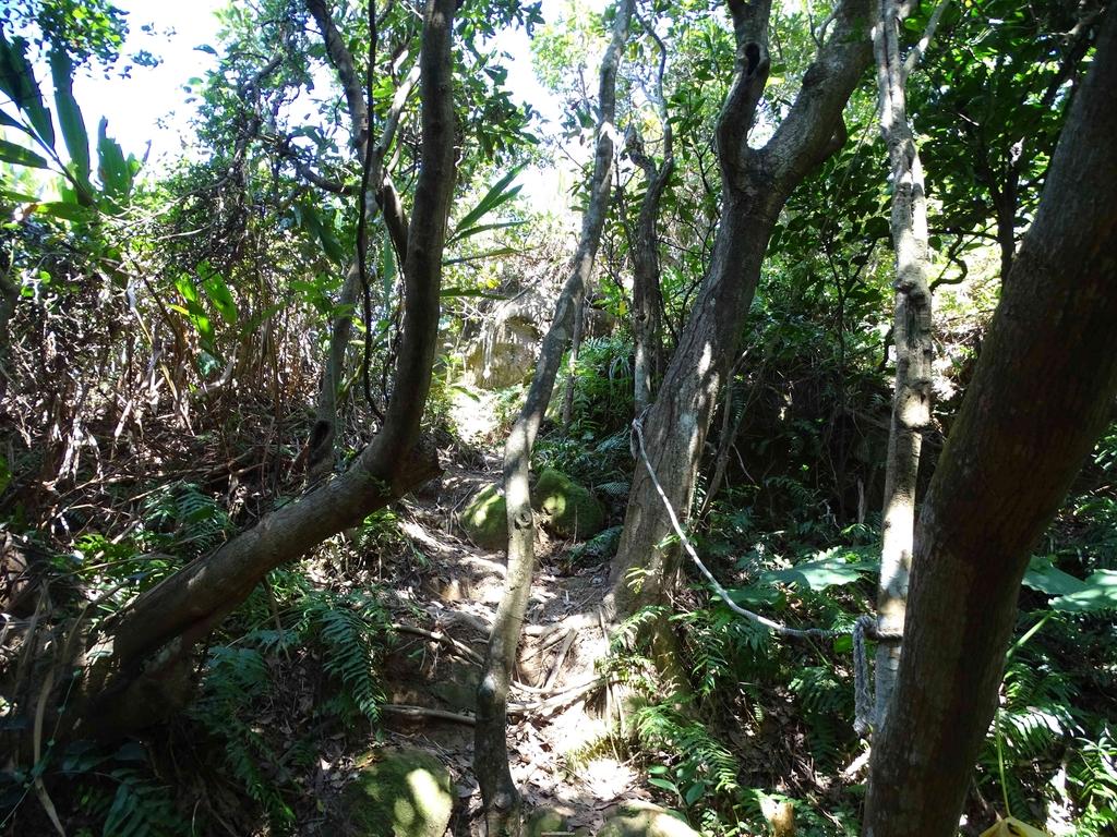1050924 新北萬里野柳里登山步道、駱駝峰稜線步道:DSC08665C.jpg