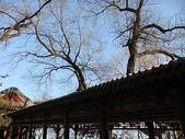 1225北京:DSC00630.JPG