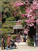 2009 宇治-賞櫻(下):DSC_0232.jpg