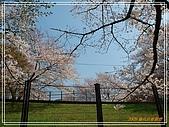 2009 宇治-賞櫻(下):DSC_0254.jpg