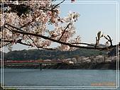 2009 宇治-賞櫻(下):DSC_0274.jpg