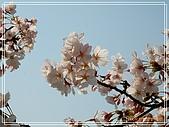 2009 宇治-賞櫻(下):DSC_0289.jpg