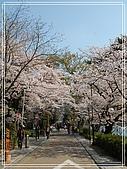 2009 宇治-賞櫻(下):DSC_0301.jpg