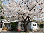 2009 宇治-賞櫻(下):DSC_0325.jpg