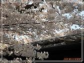 2009 宇治-賞櫻(下):DSC_0343.jpg