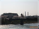 2009 宇治-賞櫻(下):DSC_0386.jpg