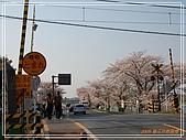2009 宇治-賞櫻(下):DSC_0391.jpg