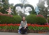 I Love Jenny & 其他生活縮影 :20200222士林官邸鬱金香展.JPG