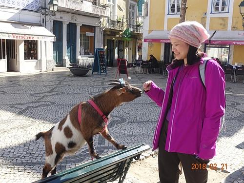 阿威羅巧遇逛街的小綿羊.JPG - 201802葡萄牙藍瓷10天