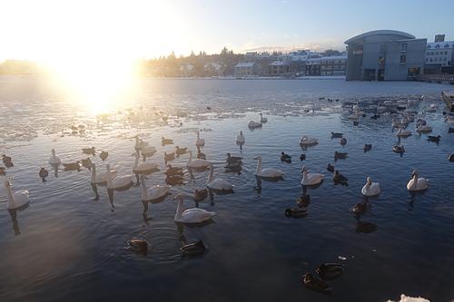 雷克雅維克特約寧湖鴨子湖的夕陽與市政廳.JPG - 201702荷比冰之旅