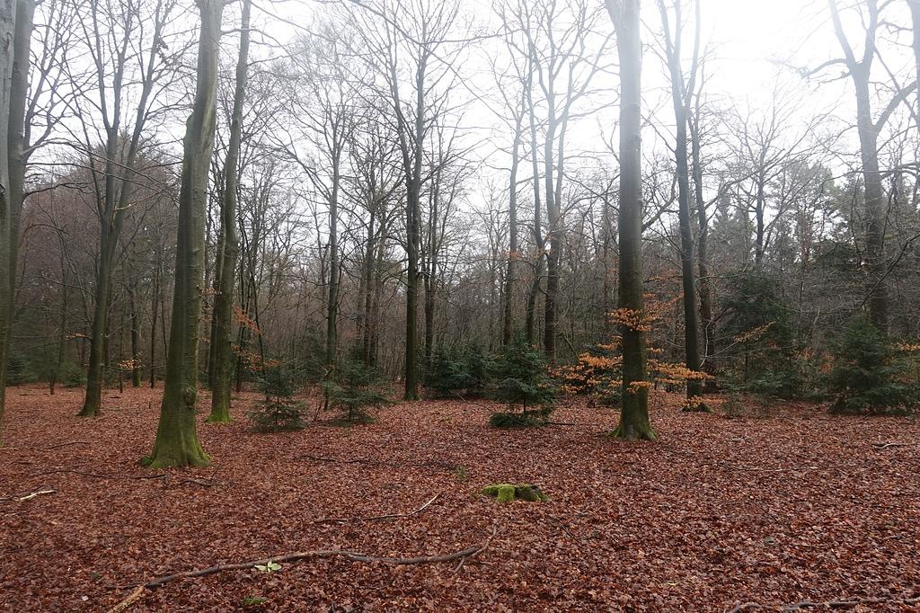 201702荷比冰之旅:梵谷森林國家公園西北歐最大的低地自然保護區被稱為荷蘭的綠色瑰寶.JPG