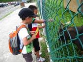 2011-07-31帶著2隻皮蛋去騎車:IMG_3651.JPG 先來餵羊..待會再去租車