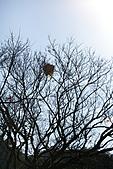 2011-02-06 菁桐國小_美麗光影乍現(上傳完畢):IMG_7631.JPG