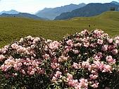 合歡山杜鵑的故事~5/22/2005:合歡北峰近頂-03.jpg