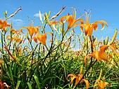 金針山上的另一個故事~8/21,22/2010:赤柯山汪家古厝的金針花.jpg