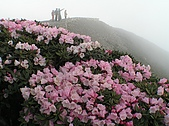合歡山杜鵑的故事~5/22/2005:合歡主峰頂杜鵑花海-02.jpg