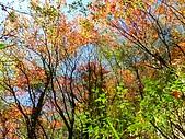 發現狂楓與楓狂-12/1/2009:P1150952.JPG