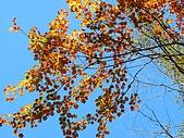 發現狂楓與楓狂-12/1/2009:P1160003.JPG