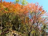 發現狂楓與楓狂-12/1/2009:P1160017.JPG