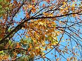 發現狂楓與楓狂-12/1/2009:P1160124.JPG