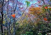 發現秀巒楓景的故事-2008-12-27:秀巒晨光楓景-12-27-1.jpg