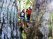 發現秀巒楓景的故事-2008-12-27:秀巒楓香林-01.jpg