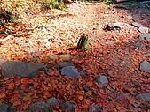 發現狂楓與楓狂-12/1/2009:P1150997.JPG
