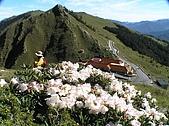 合歡山杜鵑的故事~5/22/2005:合歡山莊-02.jpg