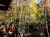 發現秀巒楓景的故事-2008-12-27:秀巒楓香林-02.jpg