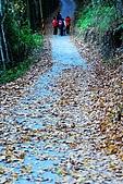 發現秀巒楓景的故事-2008-12-27:秀巒楓香林-03.jpg