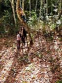發現秀巒楓景的故事-2008-12-27:秀巒楓香林-04.jpg