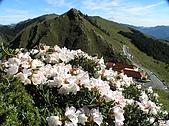 合歡山杜鵑的故事~5/22/2005:合歡山莊-02-1.jpg