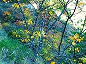 發現狂楓與楓狂-12/1/2009:P1150860.JPG