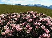 合歡山杜鵑的故事~5/22/2005:合歡北峰近頂-02.jpg