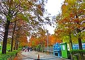 林內農田水利文物館~落羽松:IMG_7797.JPG