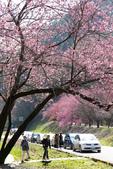 1070212-武陵農場櫻花季:IMG_9636.jpg