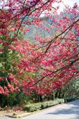 1070212-武陵農場櫻花季:IMG_9657.jpg