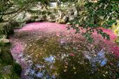 1070212-武陵農場櫻花季:IMG_9703.jpg