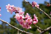 1070212-武陵農場櫻花季:IMG_9679.jpg