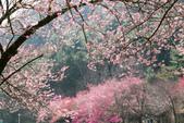 1070212-武陵農場櫻花季:IMG_9641.jpg