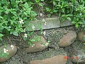 鐵砧山半日遊20110319:DSC04435.JPG