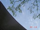 酒桶山之旅20110426:DSC04758.JPG