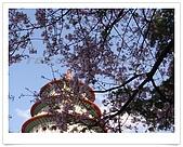 天元宮賞櫻:DSC02872.jpg