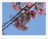 天元宮賞櫻:DSC02857.jpg