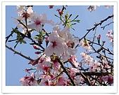 天元宮賞櫻:DSC02860.jpg